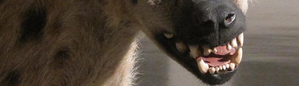 Hyena face, Musée d'Art moderne de la Ville de Paris